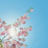 With Spring Comes Reinvention